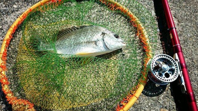 catch-chibire