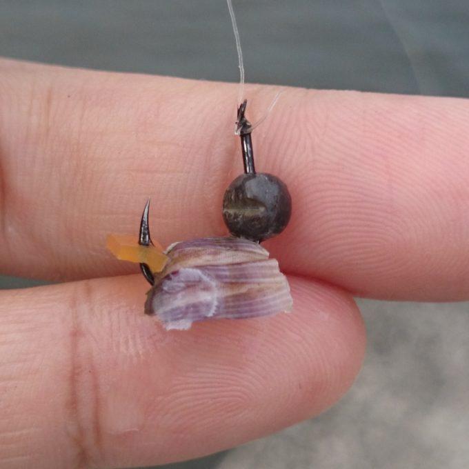 フジツボの貝グシャ