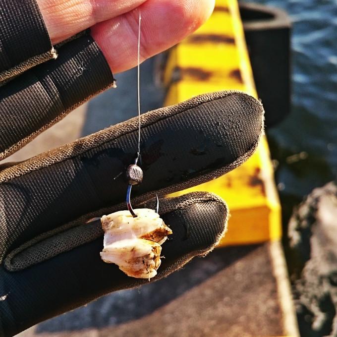 フジツボ餌にガン玉3B