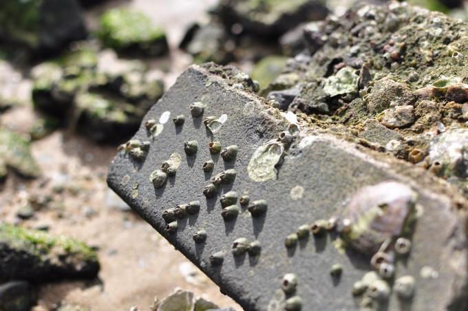 鳴尾浜のゴロタ
