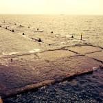 【大阪北港夢洲】北港スリットでの釣りが楽しすぎて毎日が辛い