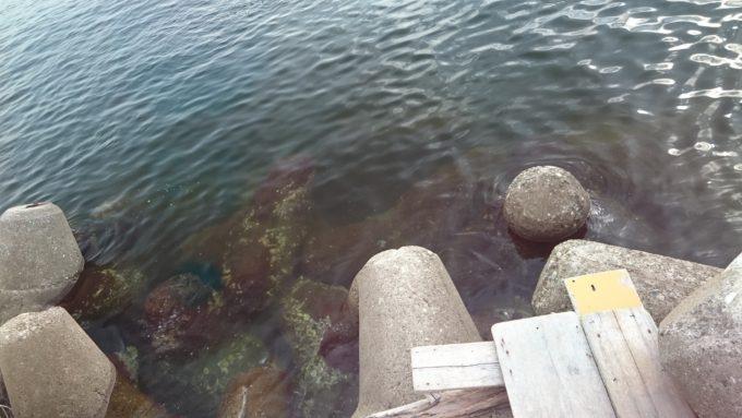 尼崎湾奥テトラ