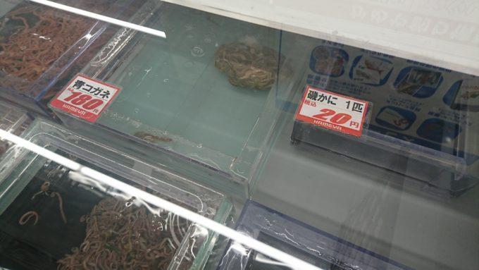 かめや釣具 岡山平井店 青コガネ