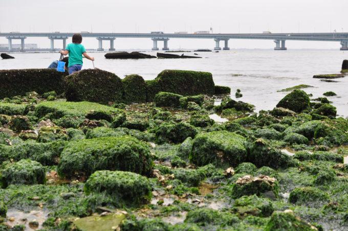 鳴尾浜 浜甲子園運動公園 船公園 鳴尾浜公園 ゴロタ