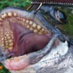 【西宮】カニ餌を極めろ!目印落とし込みで黒鯛GET!!!