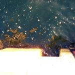 【徳島遠征】スリットで目印!朝マヅメ短時間釣行の結果!【後編】