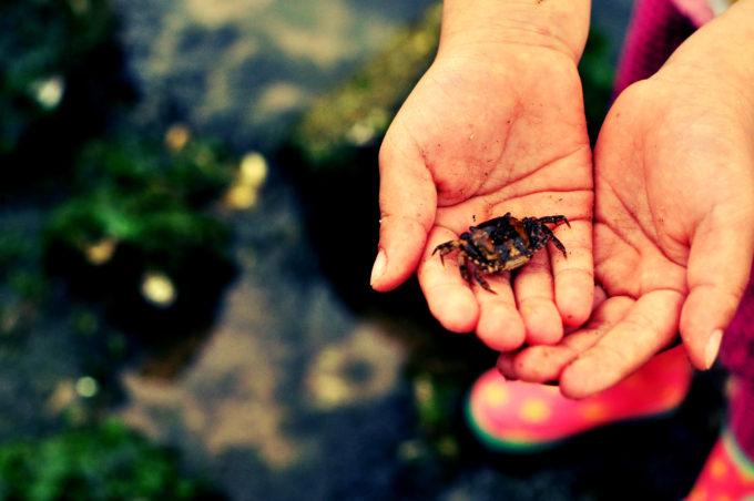 鳴尾浜 浜甲子園運動公園 船公園 鳴尾浜公園 ゴロタで採取したカニ