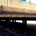 中潮ド干潮の早朝、岡山湾奥で少しだけ竿を出してきました
