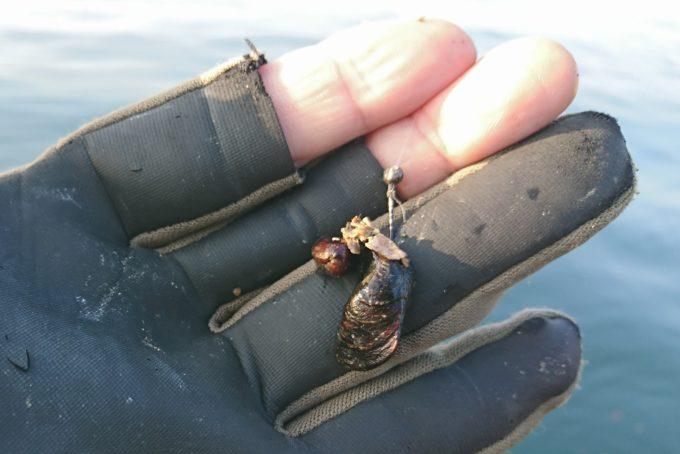 ミジ貝の付け方