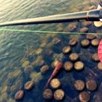 沈みテトラの穴撃ちで年無し黒鯛ゲット!朝マヅメ短時間釣行の結果!