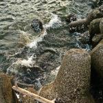 際穴に貝を放り込んで1mくらい沈めてステイするだけパターン炸裂!