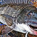 冬の激渋黒鯛をなんちゃって超前打ちで攻略!本年ラスト釣行の結果!