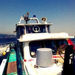 【神戸渡船】沖堤防はしごで心ゆくまでワカメやいやいしてきました