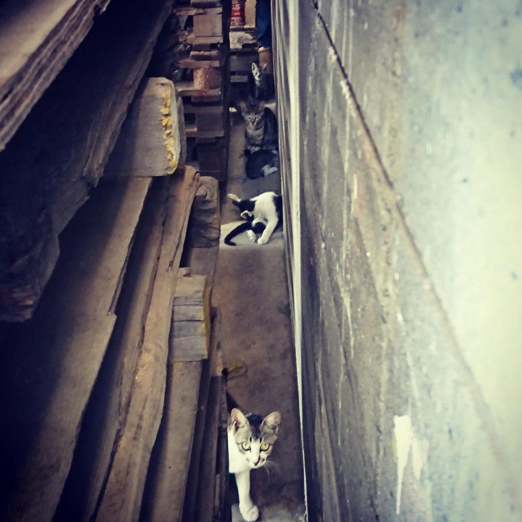 パレットの隙間に潜む猫