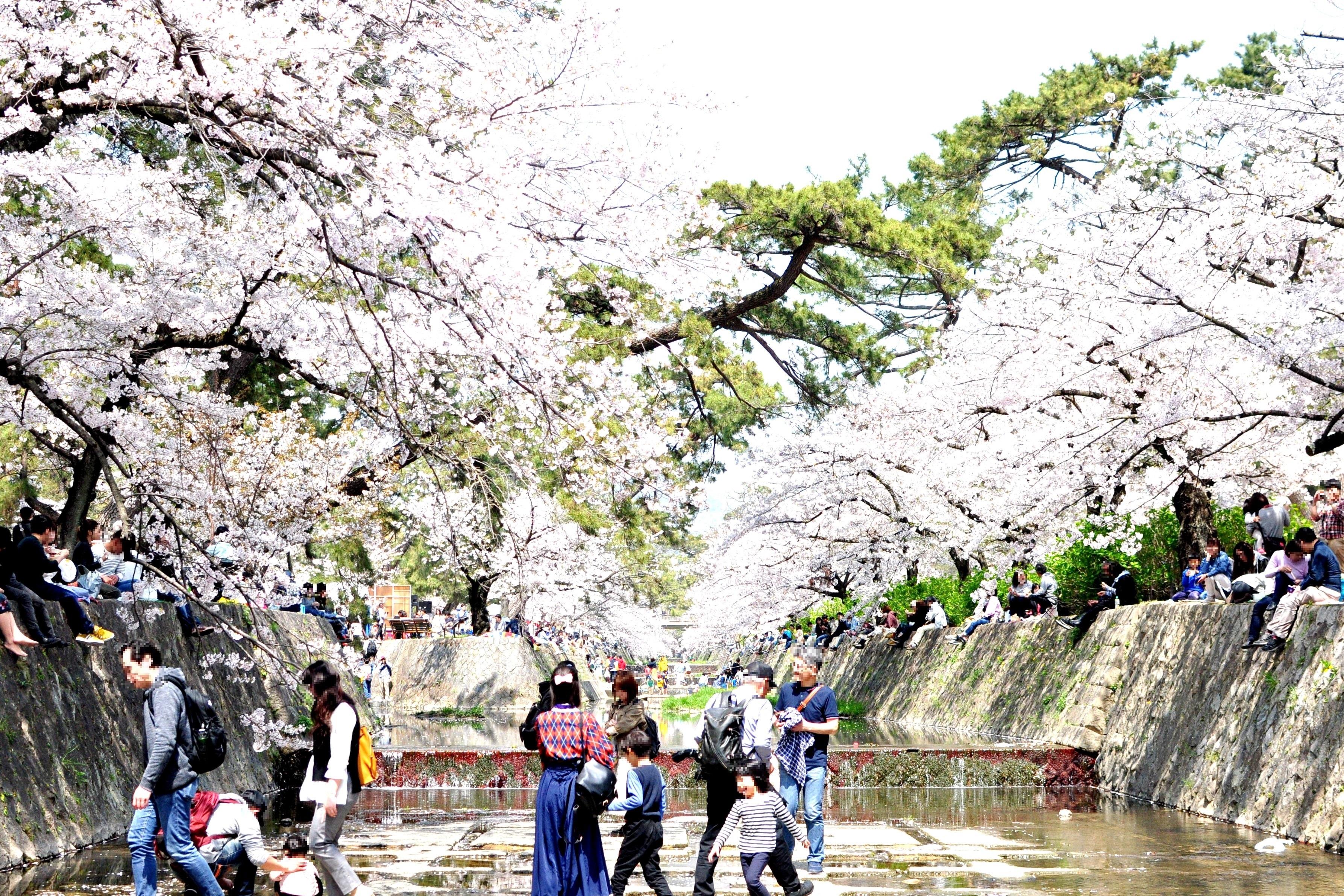 2019年4月7日 西宮夙川の桜