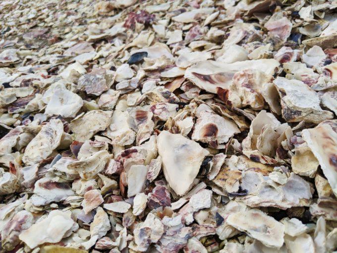 広島 牡蠣