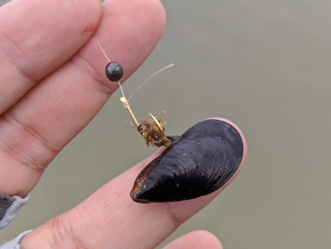 イガイ(カラス貝)の付け方
